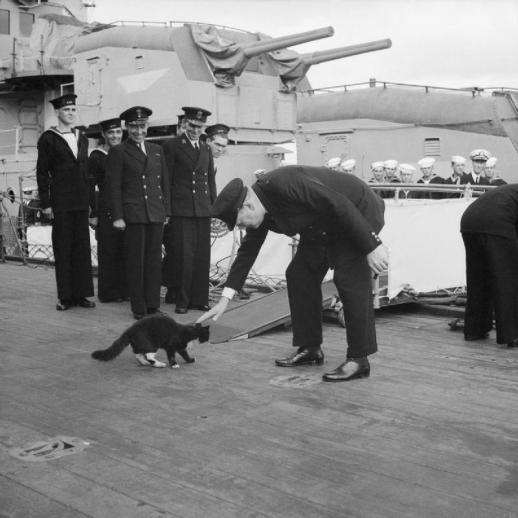 Kucing Dalam Sejarah Militer Modern The Lore Master